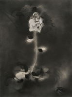 http://nilskarsten.com/files/gimgs/th-32_5_5_black-flower-4.jpg
