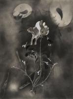 http://nilskarsten.com/files/gimgs/th-32_5_5_black-flower-5.jpg