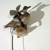 https://nilskarsten.com:443/files/gimgs/th-15_15_freedom-fighter-birdweb.jpg